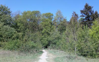 Phantasiereise in den geheimnisvollen Wald