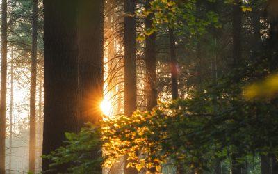 Phantasiereise in den Zauberwald
